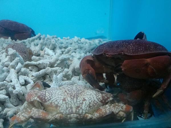 20110630拍攝於螃蟹博物館005.JPG
