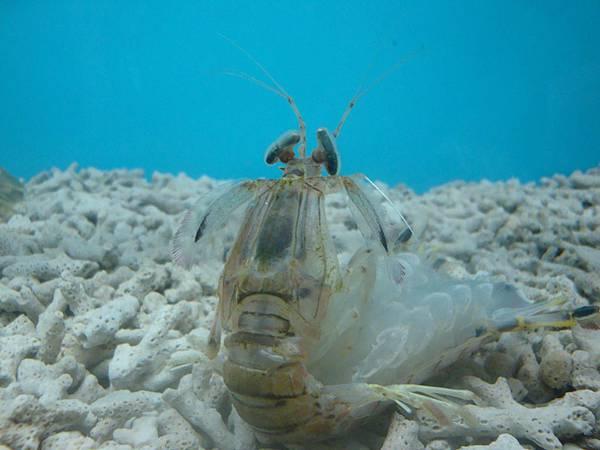20110630拍攝於螃蟹博物館009.JPG