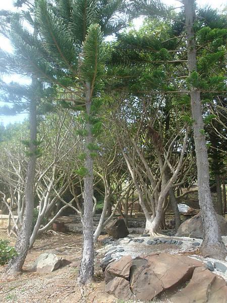 20110630拍攝於燭臺四景004.JPG