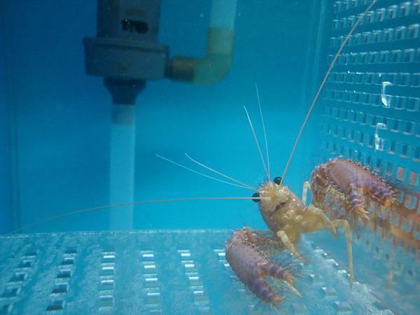 20110630拍攝於螃蟹博物館004.JPG
