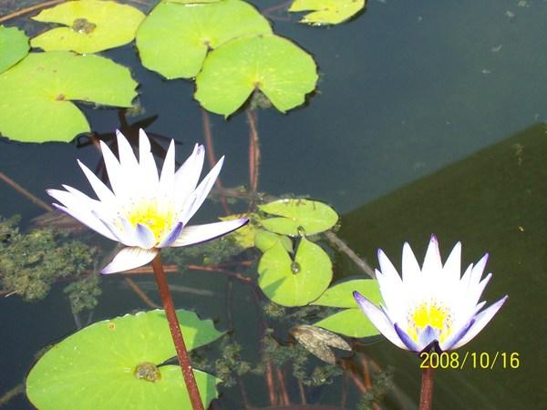 20081016拍攝於高雄梓官某處04.jpg