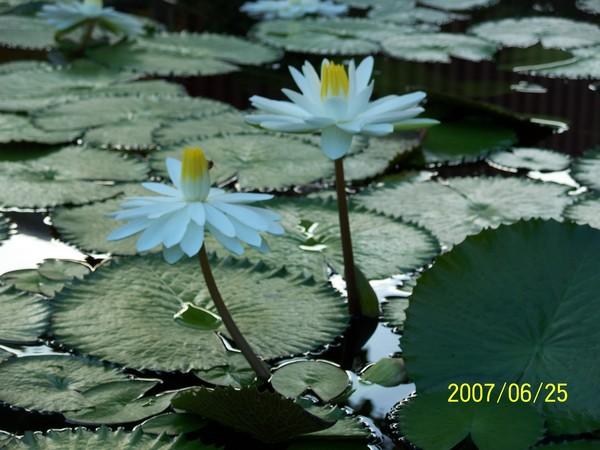 2007625拍攝於西螺休息站.jpg