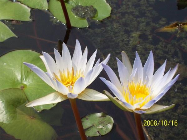 20081016拍攝於高雄梓官某處01.jpg