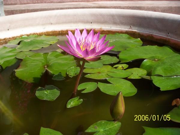 2006/1/05攝於美濃_000.jpg