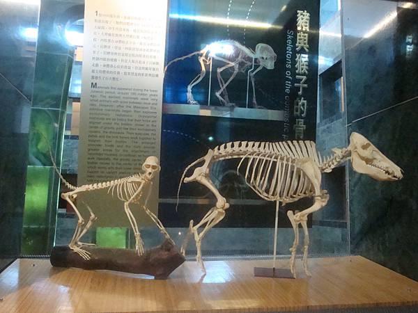 20111010拍攝於臺灣史前文化博物館036.JPG