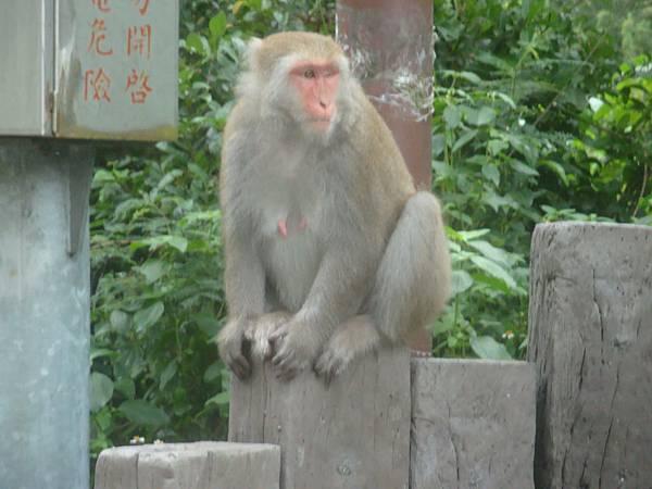 20111011拍攝於登仙橋005.JPG