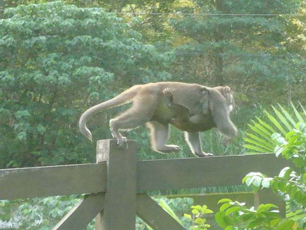 20111012拍攝於知本森林遊樂區004.JPG
