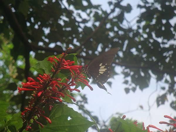 20111012拍攝於知本森林遊樂區020.JPG