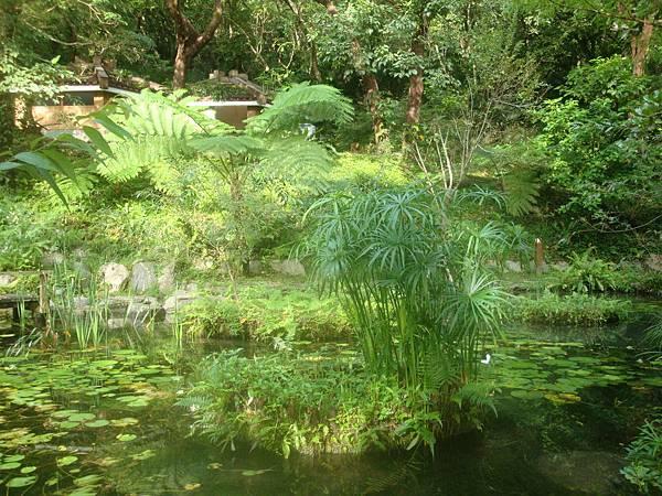 20111012拍攝於知本森林遊樂區025.JPG
