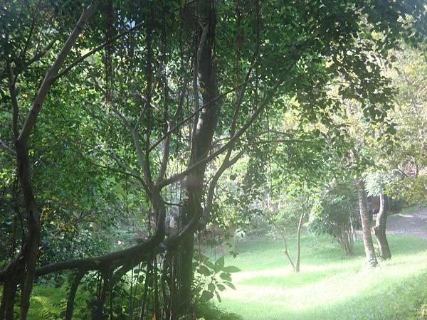 20111012拍攝於知本森林遊樂區027.JPG