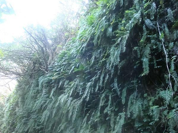 20111013拍攝於小琉球101.JPG