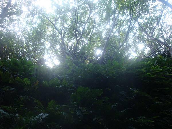 20111013拍攝於小琉球102.JPG
