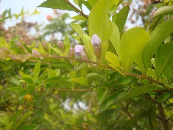 20111219拍攝於台南安平017.JPG