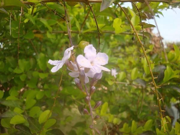 20111219拍攝於台南安平019.JPG
