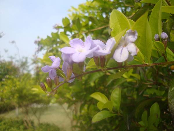 20111219拍攝於台南安平020.JPG