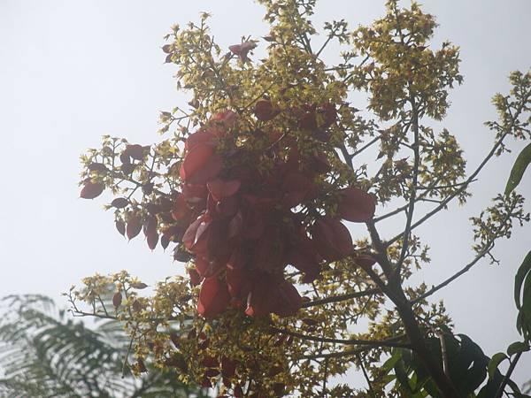 20111219拍攝於台南安平022.JPG