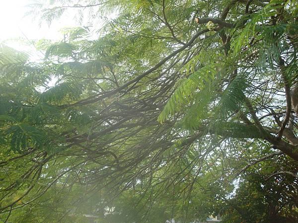 20111219拍攝於台南安平024.JPG
