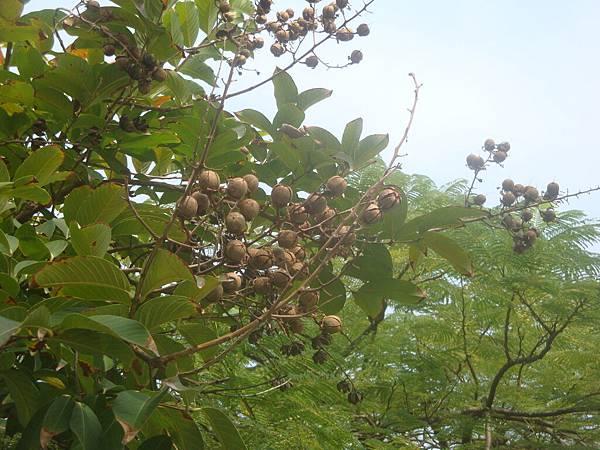 20111219拍攝於台南安平025.JPG