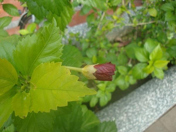 20111219拍攝於台南安平028.JPG