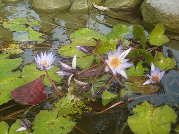 20111219拍攝於台南安平039.JPG