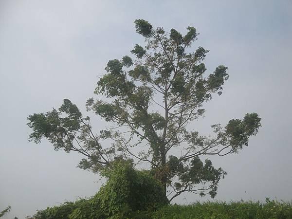 20111219拍攝於台南安平059.JPG