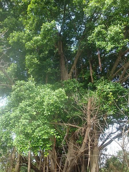 20111219拍攝於台南安平060.JPG