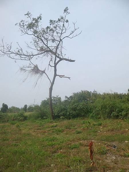 20111219拍攝於台南安平070.JPG