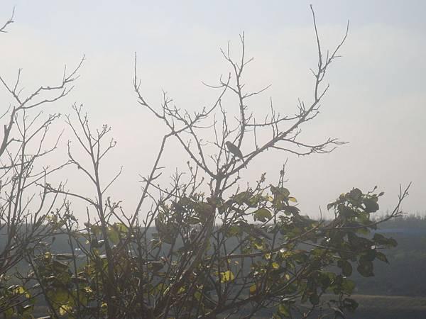 20120205拍攝於菜園005.JPG