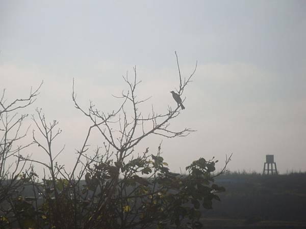 20120205拍攝於菜園006.JPG