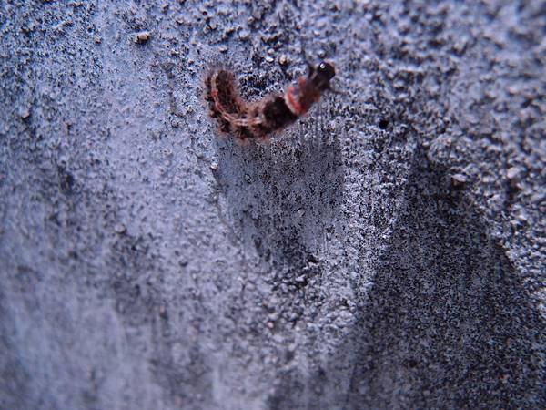 20120521拍攝於林投公園02