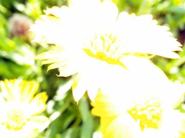 20120522拍攝於虎頭山01