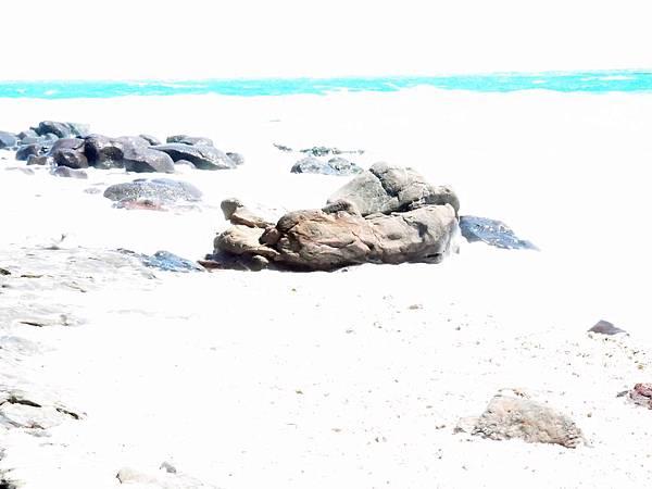 20120522拍攝於虎頭山22