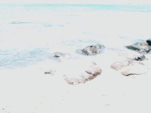 20120523拍攝於望安05