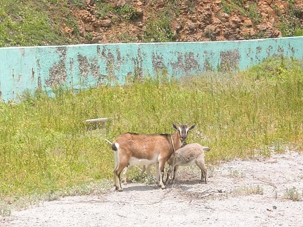 20120524拍攝於大倉嶼07
