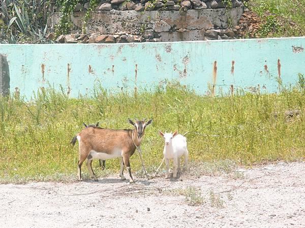 20120524拍攝於大倉嶼08