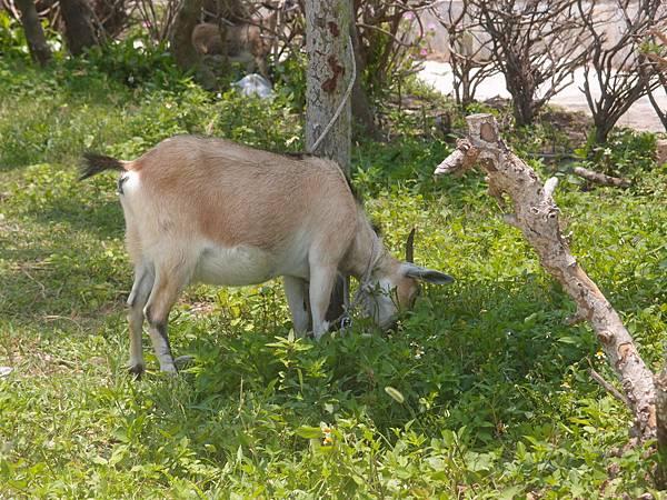 20120524拍攝於大倉嶼52