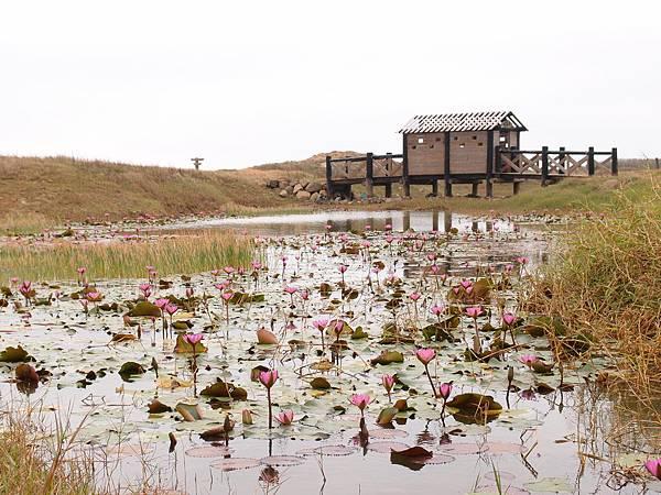 20121227拍攝於二崁水資源生態池005