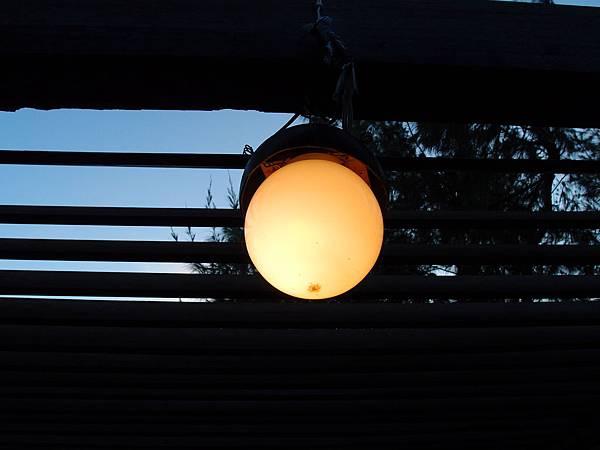 20121228拍攝於及林春017