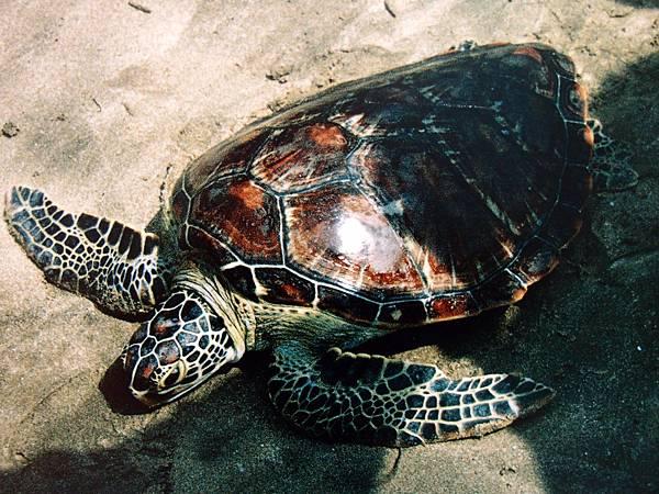 20121230拍攝於海洋地質公園中心045