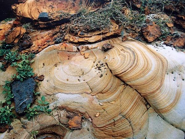 20121230拍攝於海洋地質公園中心052