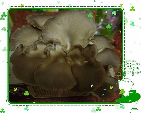 20130306秀珍菇