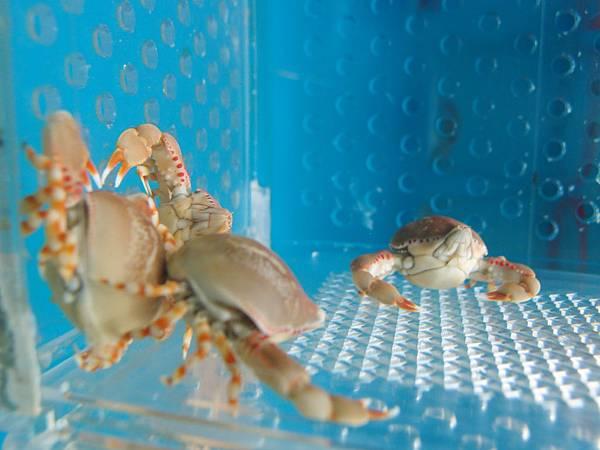 20130520拍攝於竹灣螃蟹館028