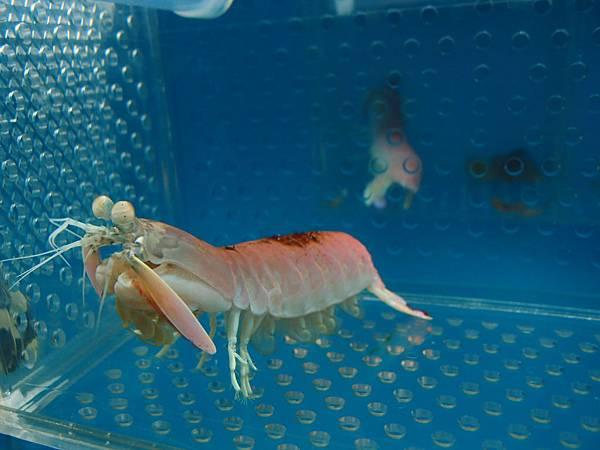 20130520拍攝於竹灣螃蟹館036
