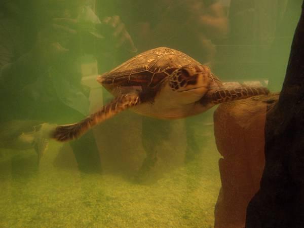 20130521拍攝於水族館005