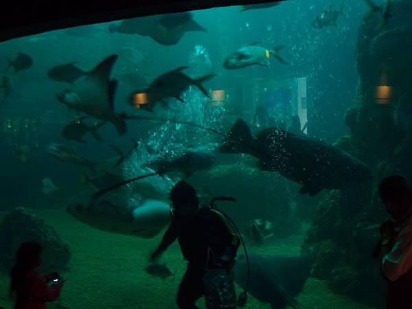 20130521拍攝於水族館041