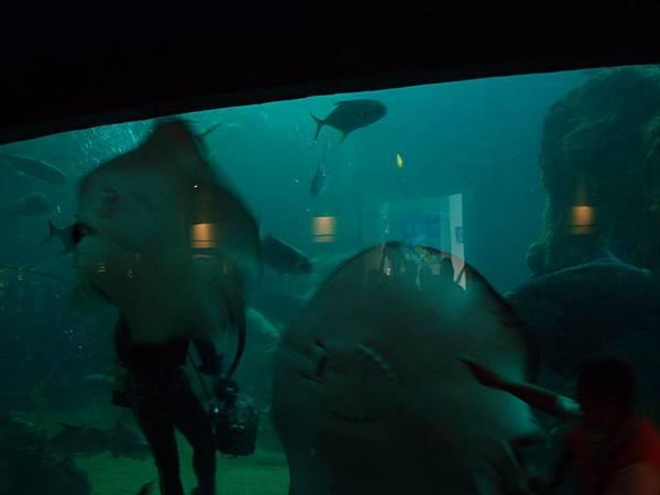20130521拍攝於水族館042
