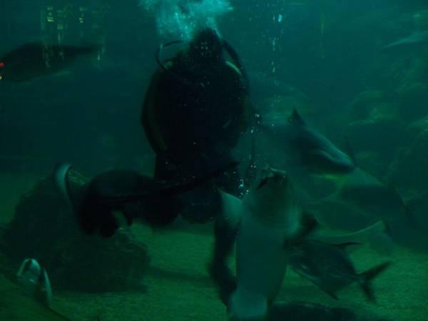20130521拍攝於水族館045