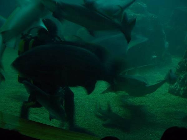 20130521拍攝於水族館052