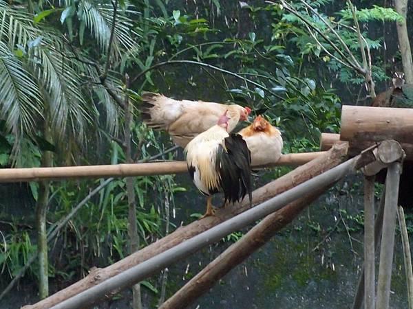 20130625拍攝於鳳凰谷鳥園029.JPG