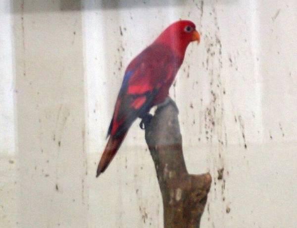 20130625拍攝於鳳凰谷鳥園097.JPG